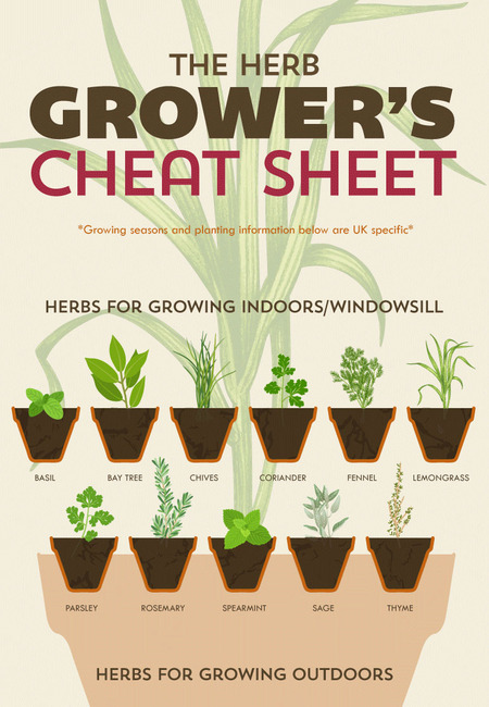 The herb grower's cheat sheet infographic