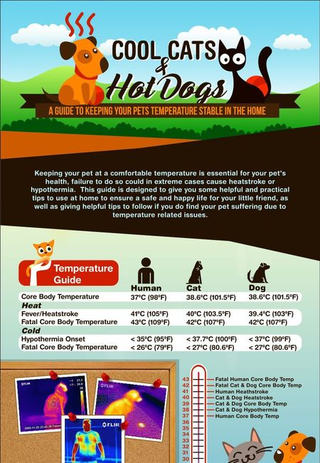 Infographic cool cats and hot dogs
