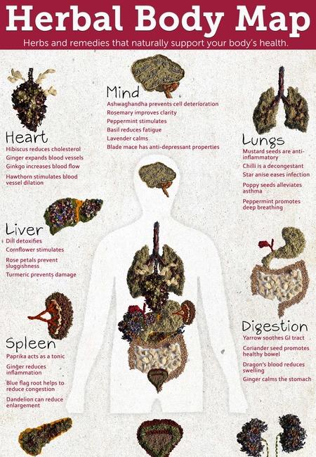 Baldwins herbal body map