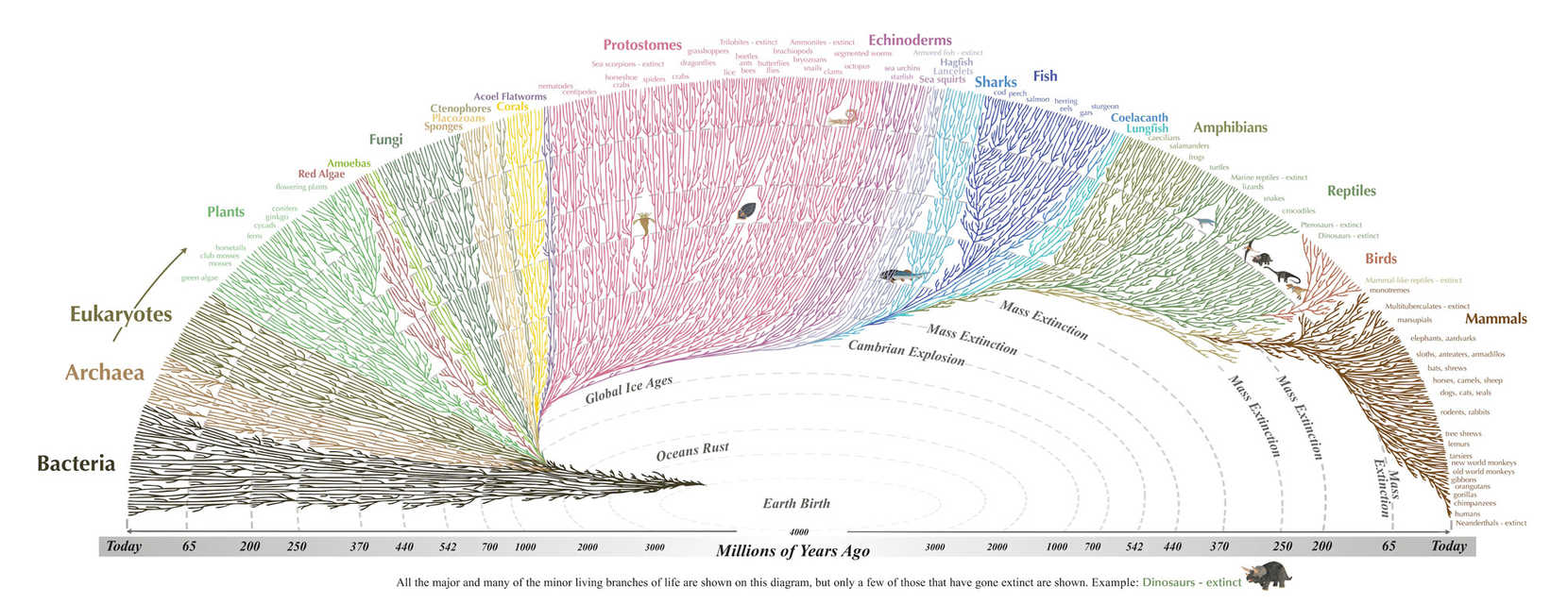 Tree of life 2000