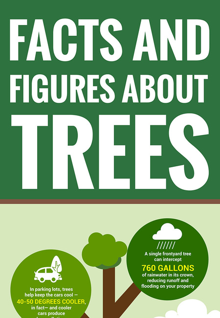 Tree facts and figures