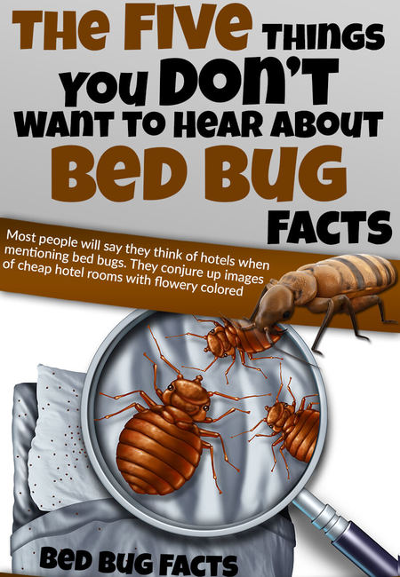 Infographic 122 the five things you don%e2%80%99t want to hear about bed bug facts