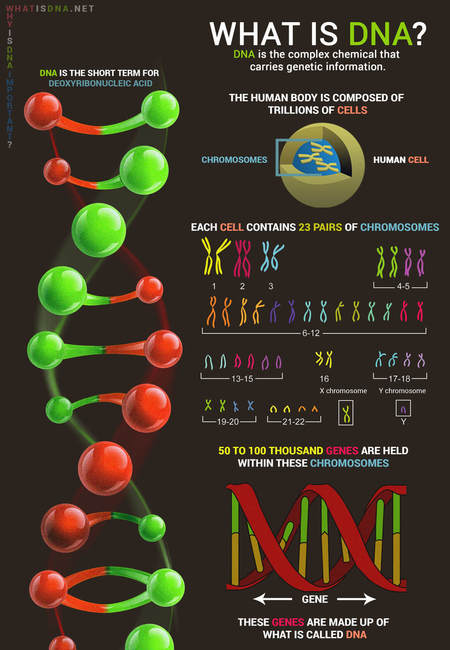 What is dna infographic