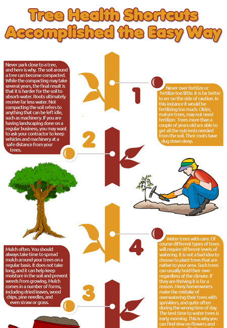 Tree health shortcuts accomplished the easy way infographic