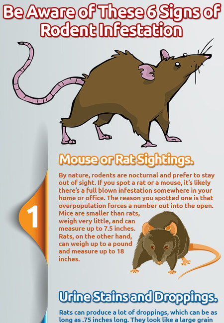 Infographic 134 be aware of these 6 signs of rodent infestation