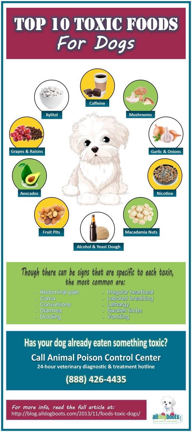 Toxic foods dogs