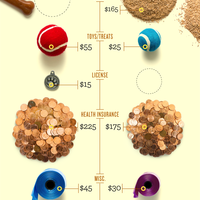 Cost of owning a pet infographic infographicsmania