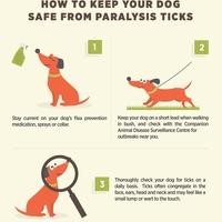 Paralysis tick infographic