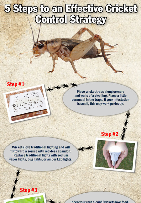 Infographic 136 cricket
