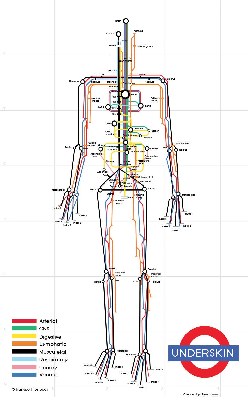 人体組織を路線図で表現した「Underskin: The Human Subway Map」
