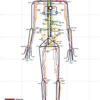 Human subway map full size