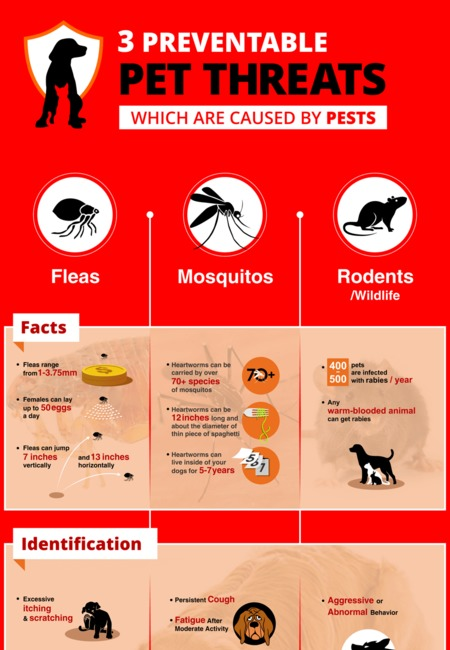 3 preventable pest threats infographic