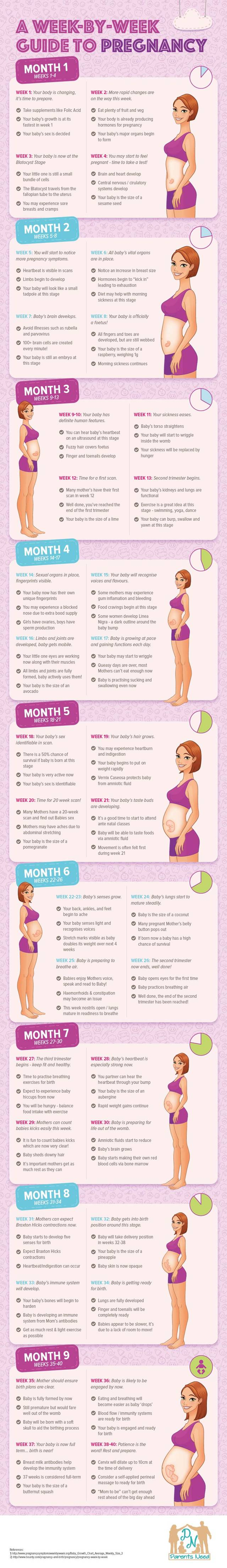 Parentsneed a week by week guide to pregnancy infographic
