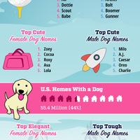 2016 dog names infographic