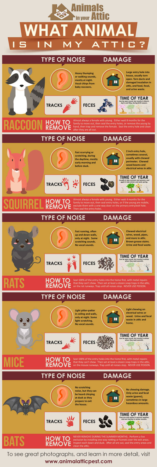 What animal is in my attic infographic