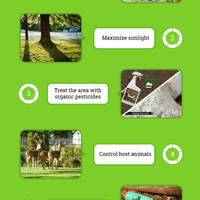Tick proof your yard infographic