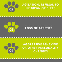 6 hidden signs your cat is in pain