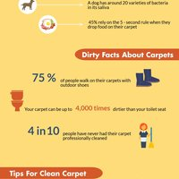 What's lurking in your carpet