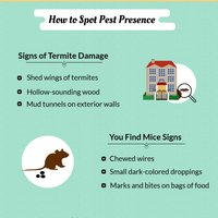 Reasons to hire pest control company