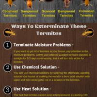 Ways to exterminate termite