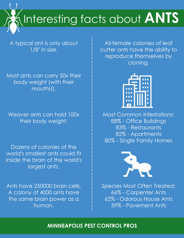 Interesting facts about ants minneapolis pest control pros
