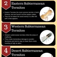 5 types of termites
