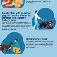 Animal shelter 1