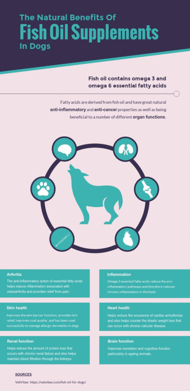 Fish oil supplements dogs infographic