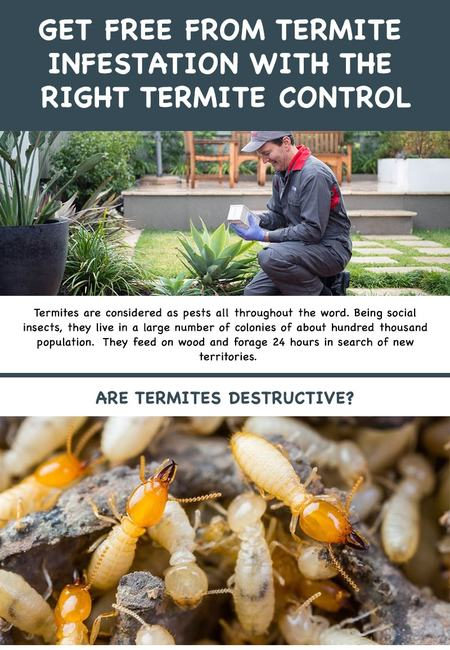 How to solve or stop termite infestation min