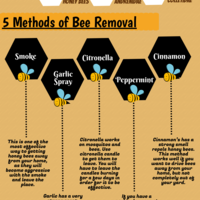 5 methods of bee removal