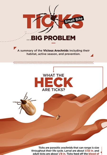 Ticks small bite big problem 2 small