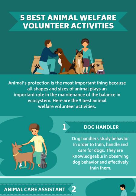 5 best animal welfare volunteer activities 2019 v2
