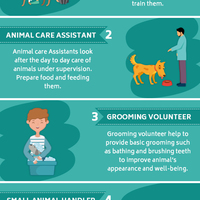 5 best animal welfare volunteer activities 2019 v2