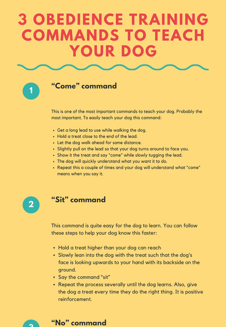 3 obedience training commands to teach your dog