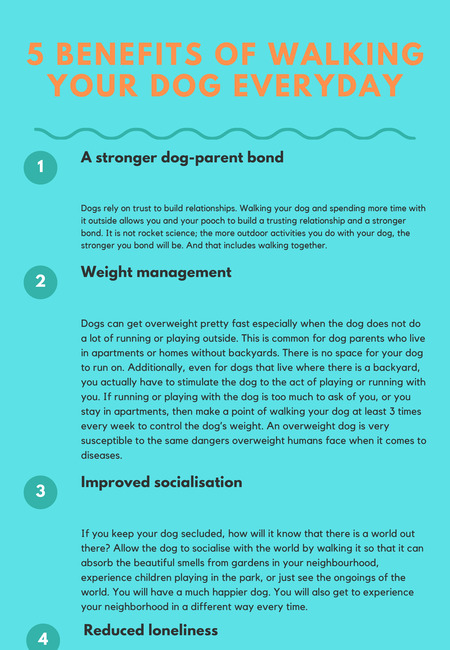 5 benefits of walking your dog everyday