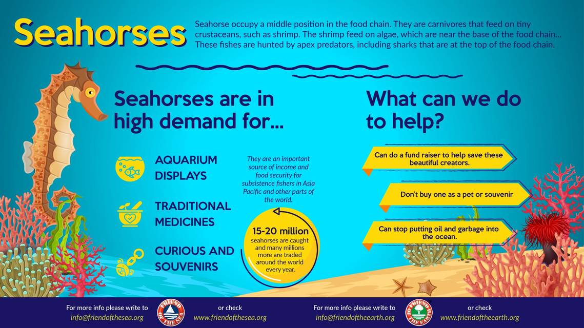 Save the  seahorses friend of the sea