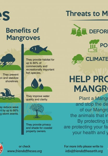 Mangrove forests fos